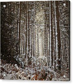 Acrylic Print featuring the photograph Snowed Forest by Antonio Jorge Nunes