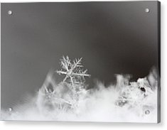 Snowflake 1 Acrylic Print by Becky Lodes