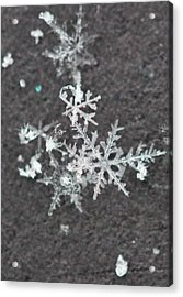 Snowflake 11 Acrylic Print by Becky Lodes