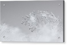 Snowflake 5 Acrylic Print by Becky Lodes