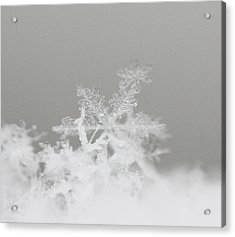 Snowflake 8 Acrylic Print by Becky Lodes