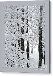 Snowing In The Woods Acrylic Print