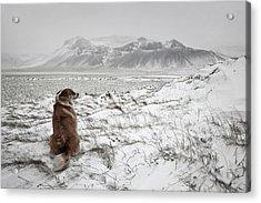 Snowstorm Acrylic Print by Bragi Ingibergsson -