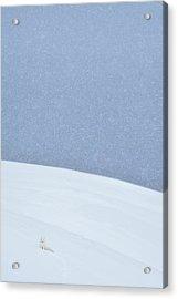 Snowy Arctic Fox In Svalbard Acrylic Print