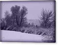 Snowy Bench In Purple Acrylic Print by Carol Groenen