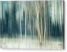 Snowy Birch Grove Acrylic Print by Priska Wettstein