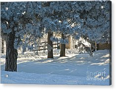 Acrylic Print featuring the photograph Snowy Blue Pines by Jessie Parker