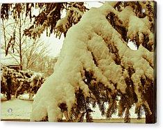 Snowy Branch Acrylic Print by Nickaleen Neff
