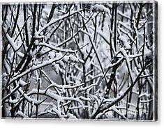 Snowy Branches Acrylic Print by Birgit Tyrrell