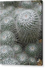 Snowy Cactus  Acrylic Print