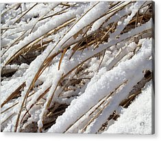 Snowy Cattail Reeds In Bucks County Acrylic Print