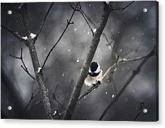 Snowy Chickadee Acrylic Print