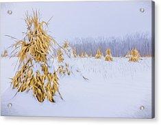 Snowy Corn Shocks - Artistic Acrylic Print