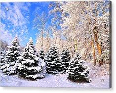 Snowy Dreams Acrylic Print by Angel Cher
