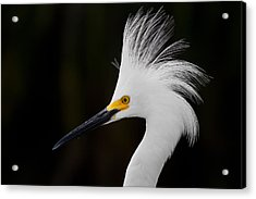 Snowy Egret Crown Acrylic Print by Andres Leon