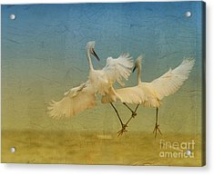 Snowy Egret Dance Acrylic Print
