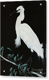 Acrylic Print featuring the painting Snowy Egret by DiDi Higginbotham