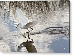 Snowy Egret Gliding Across The Water Acrylic Print by John M Bailey