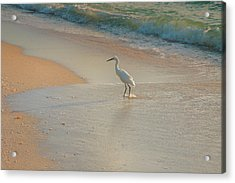 Snowy Egret In Surf II Acrylic Print by Steven Ainsworth