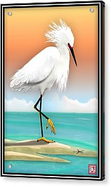 Snowy Egret White Heron On Beach Acrylic Print by John Wills