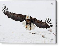 Snowy Landing Acrylic Print