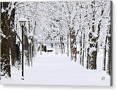 Snowy Lane In Winter Park Acrylic Print by Elena Elisseeva