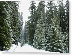 Snowy Mount Hood Forest Acrylic Print by Charmian Vistaunet