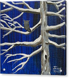Snowy Night Acrylic Print by Jaime Haney