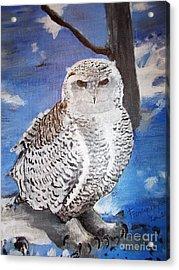 Snowy Owl . Acrylic Print by Francine Heykoop