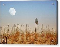 Snowy Owl And The Moon Acrylic Print
