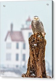 Snowy Owl At The Lighthouse Acrylic Print