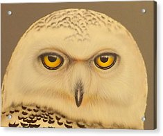 Acrylic Print featuring the painting Snowy Owl by Darren Robinson
