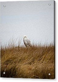 Acrylic Print featuring the photograph Snowy Owl by Gary Wightman