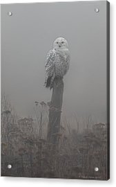 Acrylic Print featuring the photograph Snowy Owl  In The Mist by Daniel Behm