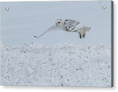 Acrylic Print featuring the photograph Snowy Owl #1/3 by Patti Deters