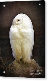 Snowy Owl Vintage  Acrylic Print by Jane Rix