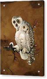Snowy Owls Acrylic Print by Richard Hinger