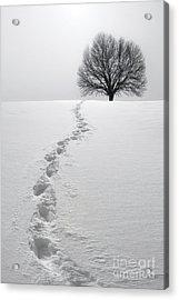 Snowy Path Acrylic Print by Diane Diederich