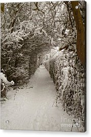 Acrylic Print featuring the photograph Snowy Path by Vicki Spindler