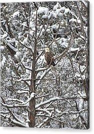 Acrylic Print featuring the photograph Snowy Perch Bald Eagle by Britt Runyon