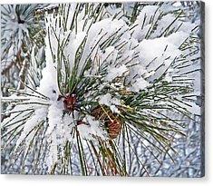 Snowy Pine Acrylic Print by Aimee L Maher Photography and Art Visit ALMGallerydotcom