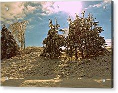 Snowy Pine Acrylic Print by Dawdy Imagery