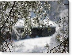 Snowy Pine Acrylic Print by Denise Romano