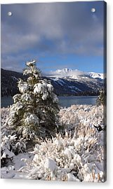 Acrylic Print featuring the photograph Snowy Pine  by Duncan Selby