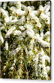Snowy Pines Acrylic Print