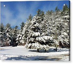 Acrylic Print featuring the photograph Snowy Pines by Janice Drew