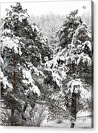 Snowy Pines Acrylic Print by Kathleen Struckle