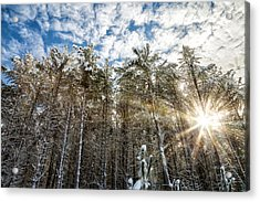 Snowy Pines With Sunflair Acrylic Print by Brian Boudreau