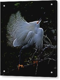 Acrylic Print featuring the digital art Wild Light 1 by William Horden