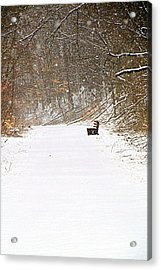 Snowy Seat Acrylic Print by Andrea Dale